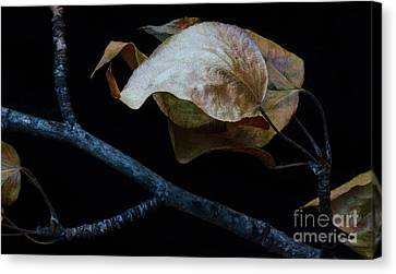 Crinkled Leaves 4 Canvas Print