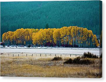 Crisp Aspen Morning Canvas Print