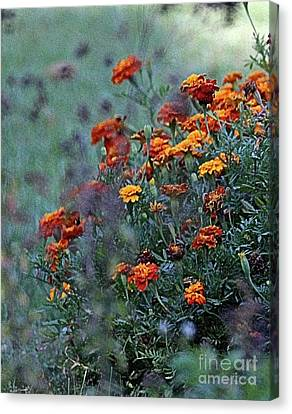 Southern Indiana Autumn Canvas Print - Crisp Autumn Marigolds  by Scott D Van Osdol