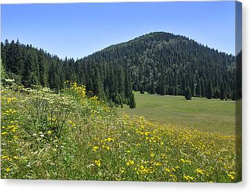 Croatian Meadow Canvas Print by Don Wolf