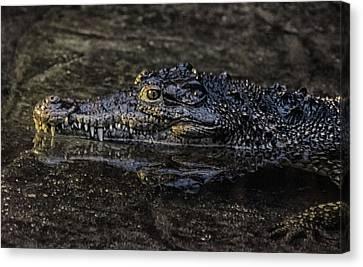 Crocodile Reflections Canvas Print by Martin Newman