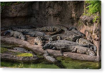 Crocodiles Canvas Print by Zina Stromberg