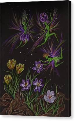 Canvas Print featuring the drawing Crocus by Dawn Fairies