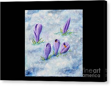 Crocus In The Snow Canvas Print