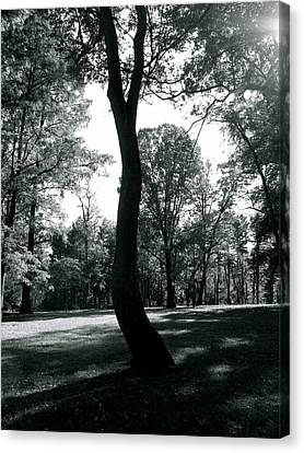 Crooked Tree Canvas Print by Bradley Smith