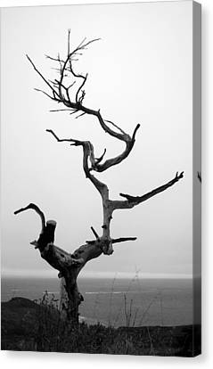 Crooked Tree Canvas Print by Matt Hanson