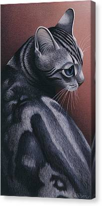 Gray Tabby Canvas Print - Cropped Cat 1 by Carol Wilson