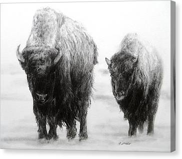 Canvas Print featuring the drawing Crossing Yellowstone by Meagan  Visser