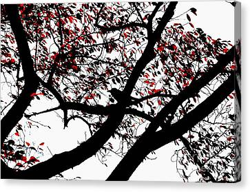 Crow And Tree In Black White And Red Canvas Print by Dean Harte