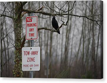Disobedient Canvas Print - Crow Asking For A Citation In Magnuson Park In Seattle by Shirley Stevenson Wallis