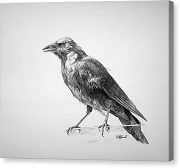 Birds Canvas Print - Crow Drawing by Steve Goad