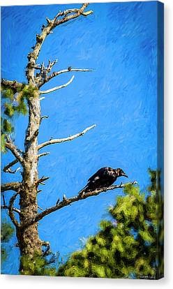 Crow In An Old Tree Canvas Print by Ken Morris