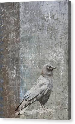 Crow In Grey Flannel Canvas Print by Carol Leigh