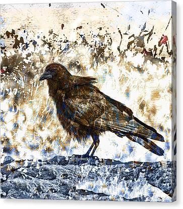 Crow On Blue Rocks Canvas Print by Carol Leigh