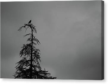 Crow Perched On Tree Top - Black And White Canvas Print by Matt Harang