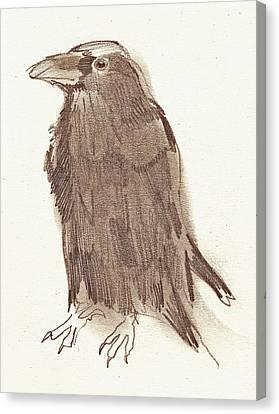 Crow Canvas Print by Sarah Lane