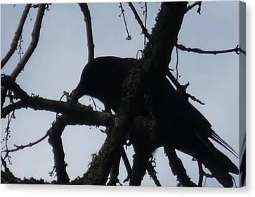Crow Silouette Canvas Print by Dawna Raven Sky