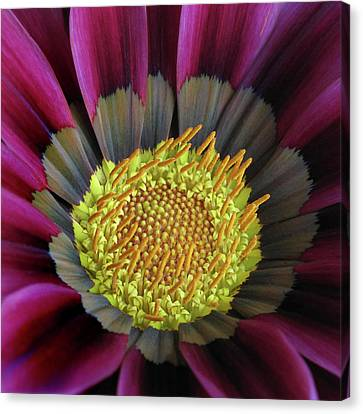 Canvas Print featuring the photograph Crown Of Pollen by David and Carol Kelly