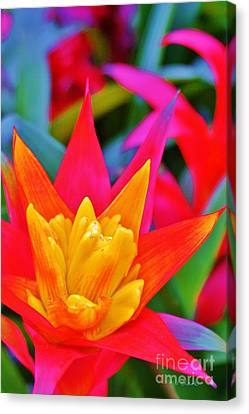 Bromeliad Canvas Print - Crowning Glory by John Clark