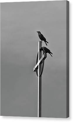 Crows On Steeple Canvas Print by Richard Rizzo