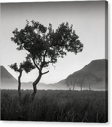 Crummock Water Tree Canvas Print