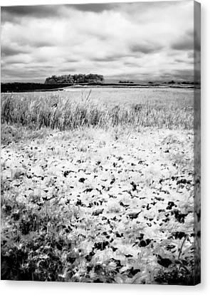 Crunchy Marsh Canvas Print