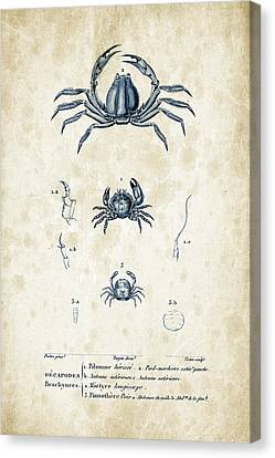 Crustaceans - 1825 - 09 Canvas Print by Aged Pixel