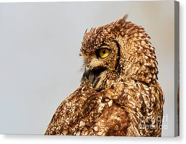 Crying Spotted Eagle-owl  Canvas Print