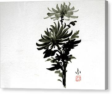 Crysanthemums Canvas Print
