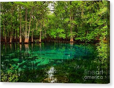 Crystal Blue Manatee Spring Waters Canvas Print