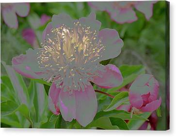 All Your Vision Canvas Print - Crystalline Flower by Don Wright
