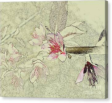 Cu Pinks Canvas Print