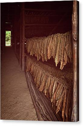 Canvas Print featuring the photograph Cuban Tobacco Shed by Joan Carroll