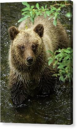 Alaska Canvas Print - Cubby by Chad Dutson