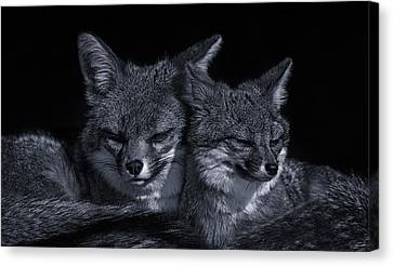 Cuddle Buddies  Canvas Print