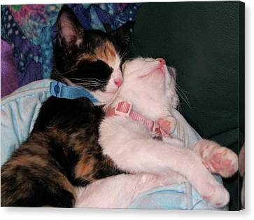 Canvas Print featuring the photograph Cuddle Buddy by Rebecca Wood