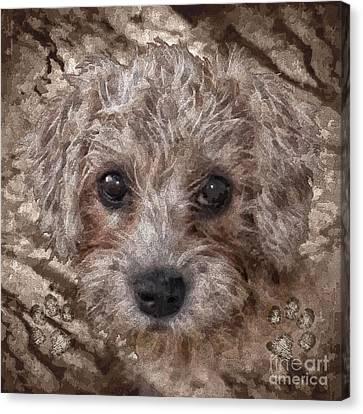 Animal Artist Canvas Print - Cuddles by Shafawndi Heartski