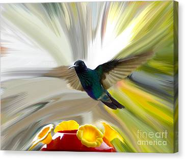 Cuenca Hummingbird Series 1 Canvas Print by Al Bourassa