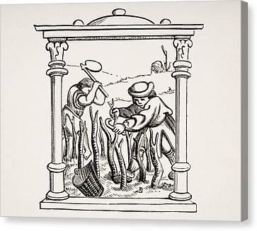 Culture Of The Vine. 19th Century Canvas Print