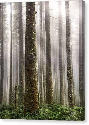 Cummins Wilderness Canvas Print by Leland D Howard
