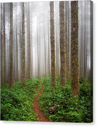 Cummins Wilderness Trail Canvas Print by Leland D Howard