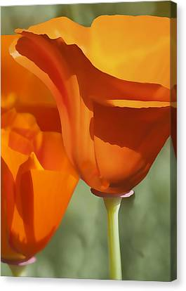 Cup Of Gold Canvas Print