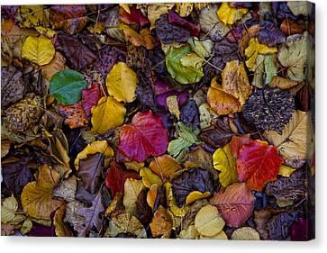 Curbside Leaf Litter Canvas Print by Robert Ullmann