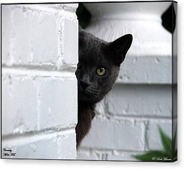Curiosity Canvas Print by Robert Meanor