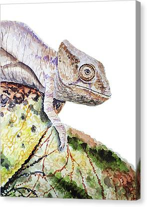 Canvas Print featuring the painting Curious Baby Chameleon by Irina Sztukowski
