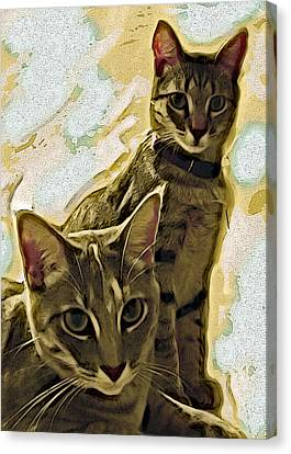 Curious Cats Canvas Print by David G Paul