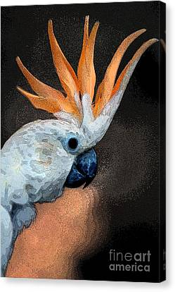 Curious Cockatoo  Canvas Print by Norman  Andrus