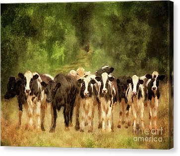 Canvas Print featuring the digital art Curious Cows by Lois Bryan