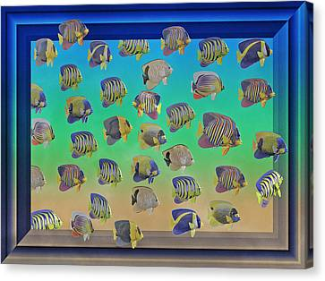 Schooling Canvas Print - Curious Fish by Betsy Knapp