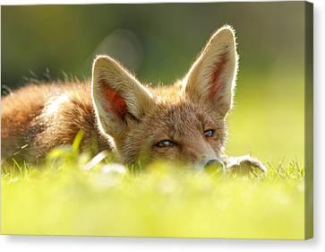 Curious Fox Kit Canvas Print by Roeselien Raimond